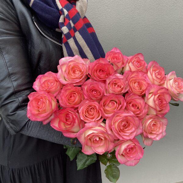 Rozes-baltas ar rozā maliņu-50 cm